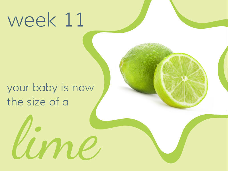Week 11 - Your baby is now the size of a lime.